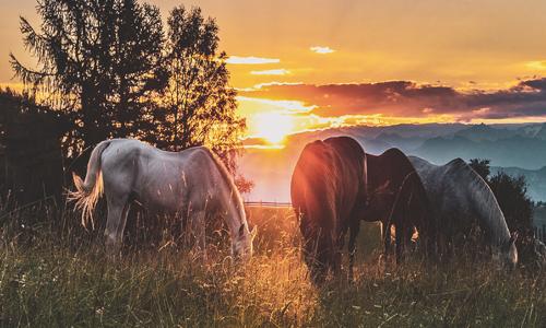 Pferde-Zugfahrzeug-kaufen